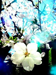 Mar_31_2014_6660001.jpg